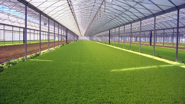 Автоматизированная ферма может давать в 350 раз больший урожай