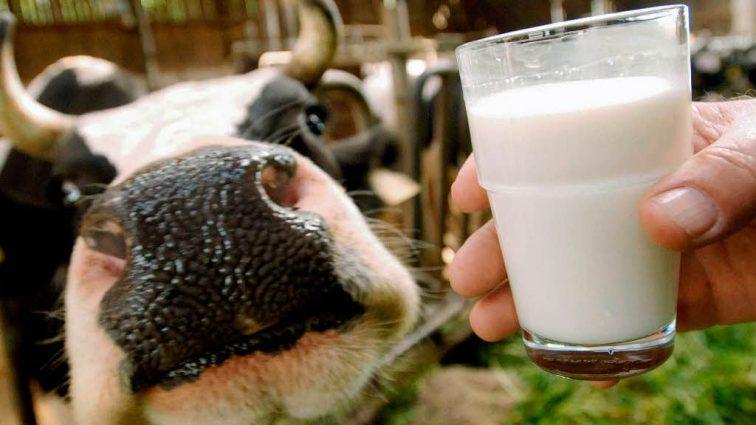 «Улучшение» для крестьян: Украинцы больше не смогут сдавать молоко