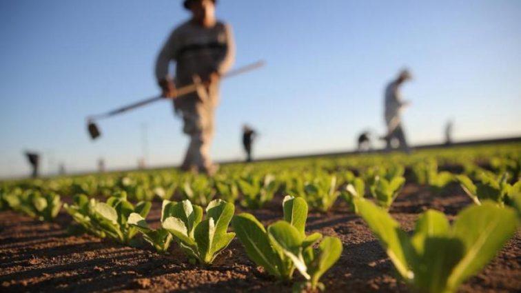 «Голод и глобальное потепление» — Ученые придумали, как спасти мир от катастрофы