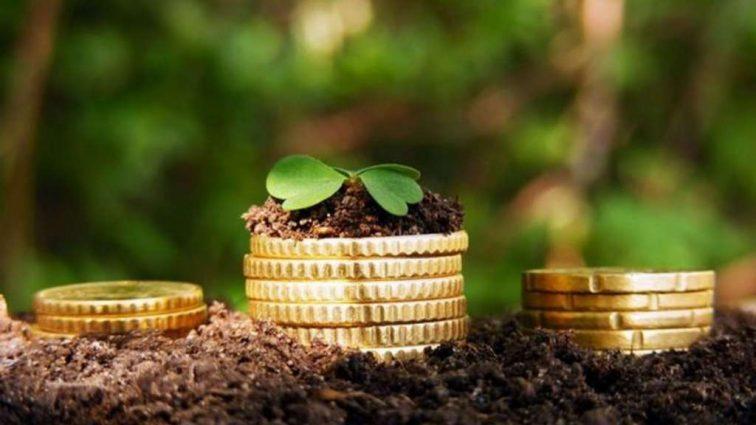 «Садоводам возместят 80% …» — Премьер-министра Украины рассказал, за что выплатят дотации