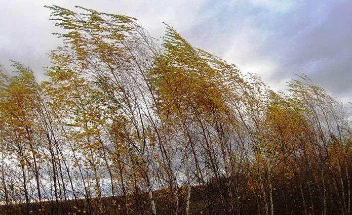 Гололед и сильный ветер: в каких областях ожидается осложнение погодных условий?