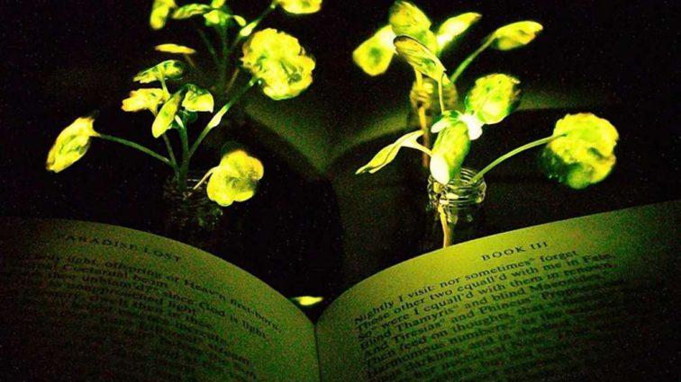 Это вас удивит: как используют растения для освещения улиц