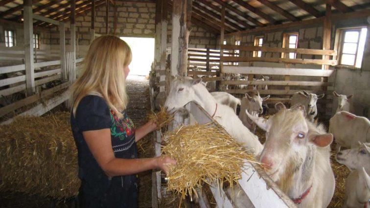 Занимаетесь животноводством? Кабмин решил спонсировать украинских фермеров: Кто и когда сможет получить деньги