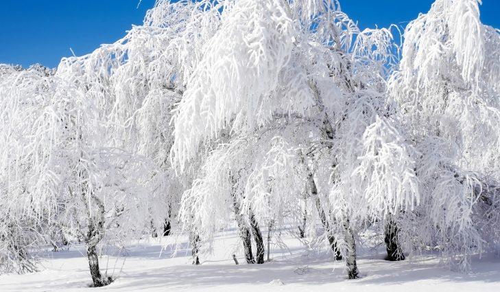 Столбики термометров будут опускаться: прогноз погоды на 20 января