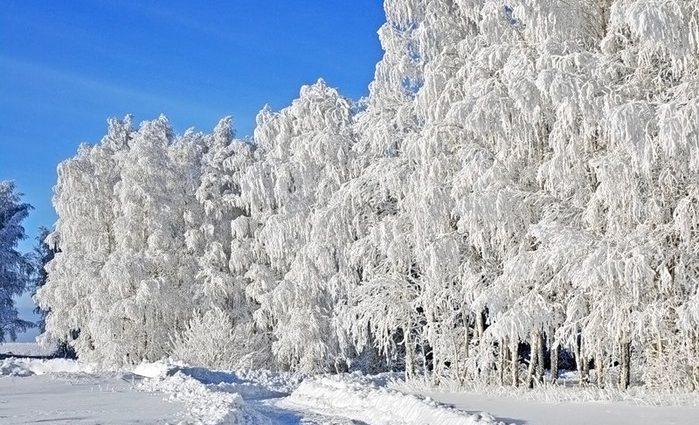 Сегодня Украину припорошит снегом прогноз погоды на 14 января