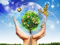 «Мы столкнулись с очень серьезной проблемой» — эколог