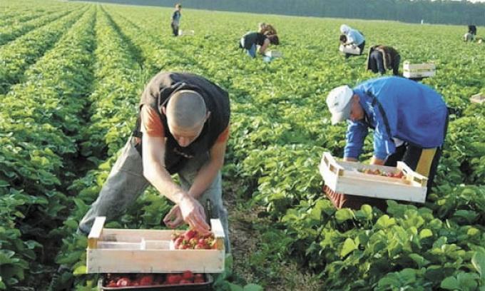 «Больше всего выезжают на заработки в …»: куда едут украинцы-заробитчане