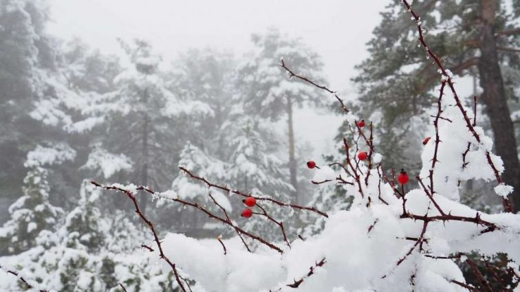 Холодно, местами сильный снег: прогноз погоды на среду, 28 февраля