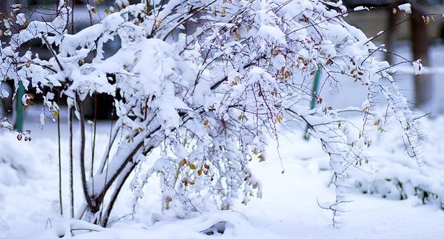 Небольшой снег, местами гололедица: прогноз погоды на понедельник, 19 февраля