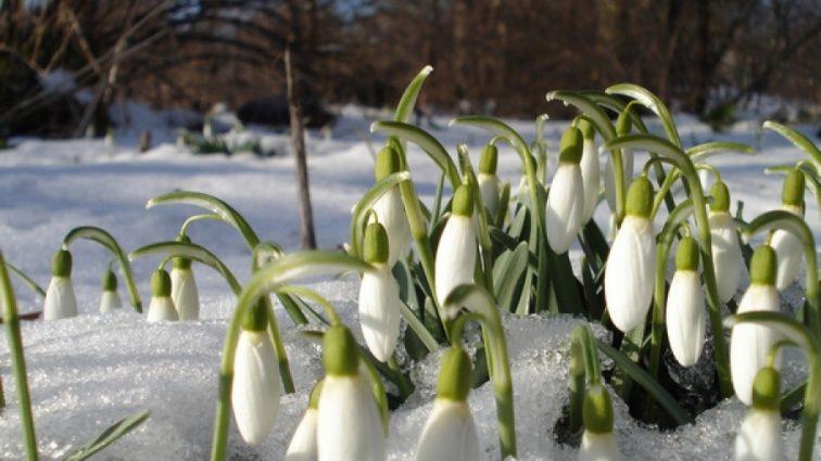 Ожидаются осадки с мокрым снегом: прогноз погоды на ближайшие дни