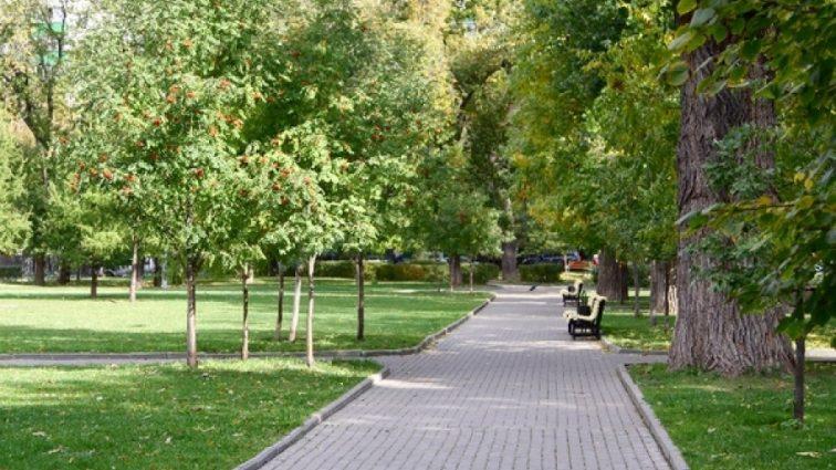«Разрешат хранить в парке, чтобы разгрузить кладбища»: детали нового законопроекта