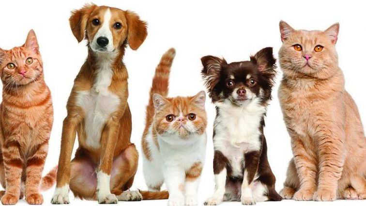 «Большие штрафы и приюты»: новый законопроект для владельцев животных