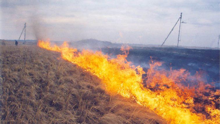 Усиление ответственности для поджигателей сухой травы: подробнее о наказании