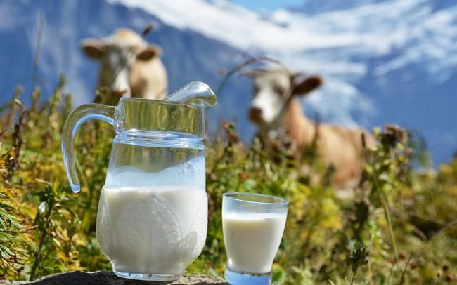 Домашнее молоко и мясо может оказаться под запретом