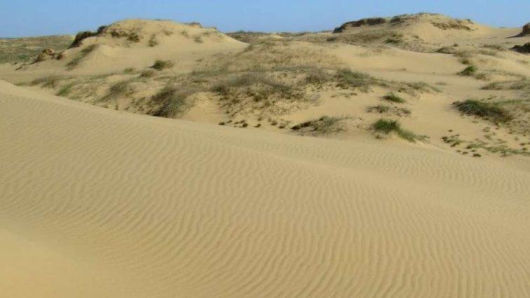 «Изменения климата»: Украина превращается в пустыню