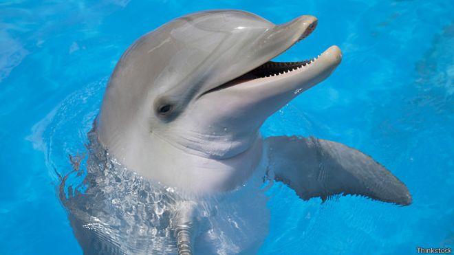 Какой уровень счастья дельфинов: тестирование