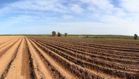 Стремительный рост цен на землю в Украине. Что нужно знать
