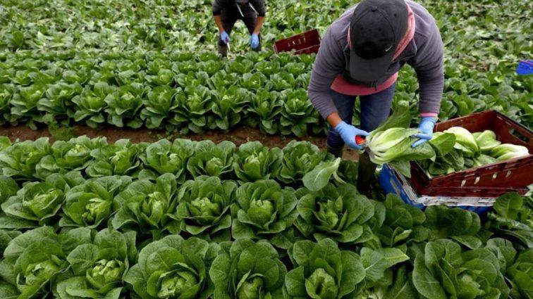 Стало известно, при каких условиях трудовые мигранты могут получить субсидии