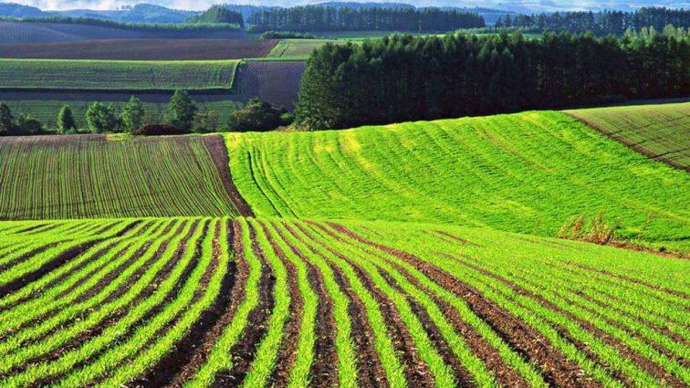К чему может привести мораторий на продажу земли? Неутешительные прогнозы эксперта