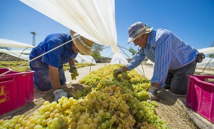 Летняя работа в Украине: где и сколько можно заработать за сезон