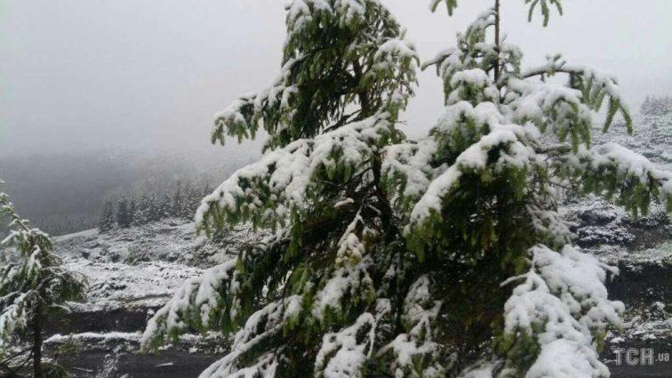 В Карпатах снова выпал снег (видео аномалии)