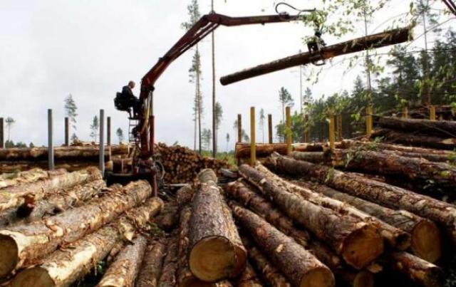 Эксперт объяснил позицию Порошенко относительно моратория на экспорт древесины