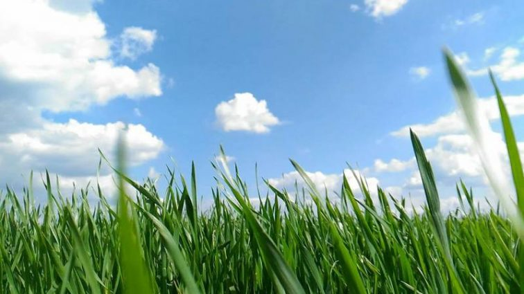 Прогноз погоды в Украине на 8 августа: затяжная жара наконец пришла во все регионы