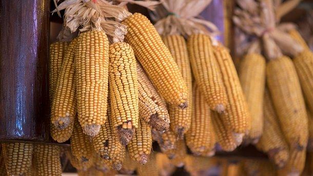 Сколько Украина зарабатывает на экспорте еды