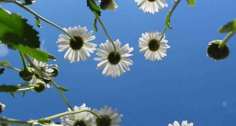 Синоптики обещают ливни, грозы и жару на выходных: узнайте подробную информацию