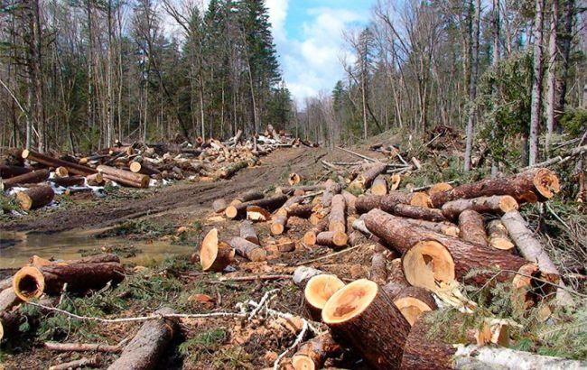 За незаконную вырубку лесов теперь можно «загреметь» в тюрьму, в Раде приняли закон