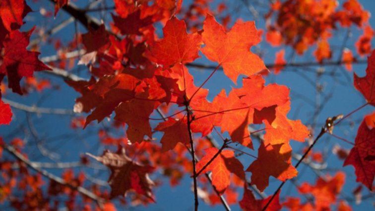 Прогноз погоды на 1 октября: что обещает синоптик в этот осенний день