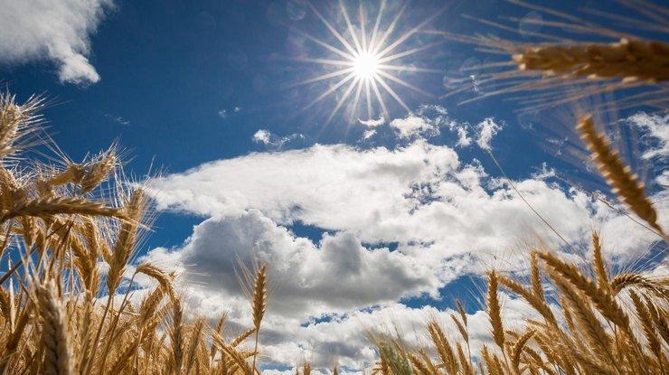 Зима никак не придет: какая погода ожидается в Украине уже в декабре