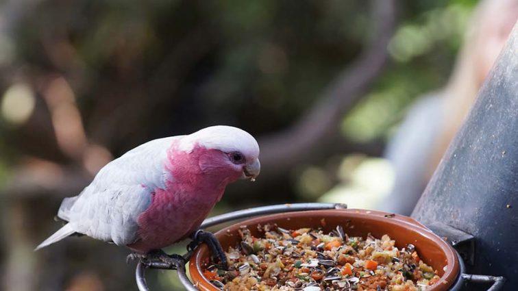 Как выбрать лучший корм для птиц: порадуйте своих любимых питомцев
